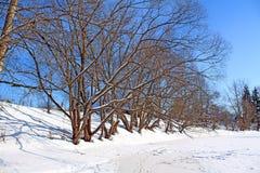 海岸河结构树 免版税库存照片