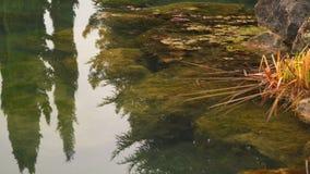 海岸淤泥的池塘 水被反射的柏 股票录像