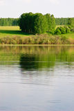 海岸湖其他结构树 免版税库存照片
