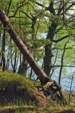 海岸湖春天 库存图片