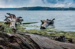 海岸漂流木头风景2 免版税库存图片