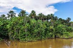 海岸的密林在亚马孙河,巴西 库存图片