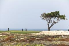 海岸的高尔夫球运动员与偏僻的树,加利福尼亚 库存照片