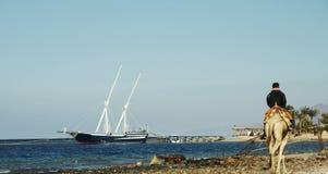 海岸红海 库存照片