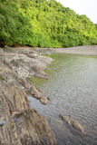 海岸线和树与海洋自然蜜饯的在巴拿马 免版税库存照片