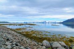 海岸线和风景沿Skotufjordur海湾 免版税库存照片