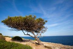 海岸线夏季的结构树 图库摄影