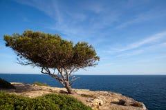 海岸线孤立结构树 库存图片
