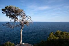 海岸线孤零零结构树 免版税库存照片
