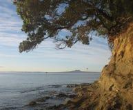海岸线新西兰 免版税图库摄影
