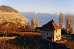 海岸线日内瓦湖 免版税图库摄影
