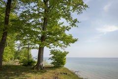 海岸线春天森林 图库摄影
