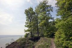 海岸线春天森林 库存照片