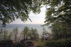 海岸线春天森林 库存图片
