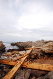 海岸线树干 图库摄影