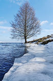 海岸线结构树 图库摄影