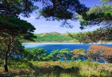 海岸线结构树10 库存图片