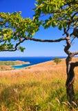 海岸线结构树26 免版税库存照片