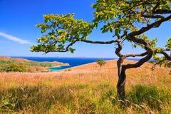 海岸线结构树28 图库摄影
