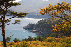 海岸线结构树6 免版税库存图片