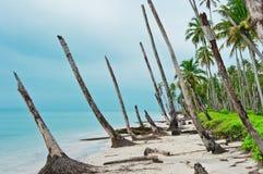 海岸线荒岛海啸 免版税库存图片