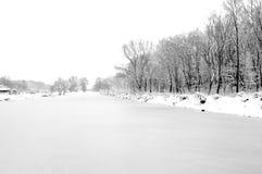 海岸结构树的冻结河 库存照片
