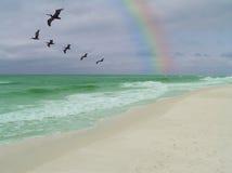 海岸绿宝石 库存照片