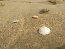 海岸自然 库存照片