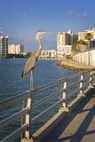 海岸街市鱼海湾重要资料 免版税库存照片