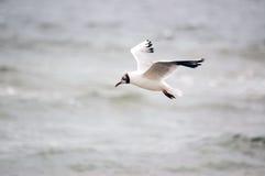 海岸重要资料 免版税库存照片