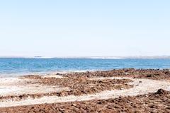 海岸死海 库存照片