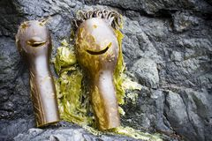 海带海草人形象 免版税库存照片