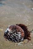 海带海运 库存照片