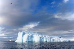 海带鸥和北极燕鸥飞行和坐冰山,南极半岛 免版税图库摄影