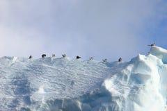 海带鸥和北极燕鸥飞行和坐冰山,南极半岛 免版税库存图片