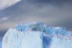海带鸥和北极燕鸥飞行和坐冰山,南极半岛 免版税库存照片