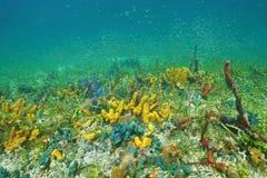 海底与五颜六色的水下的海洋生物 免版税库存照片