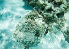海底和珊瑚礁生活 免版税库存图片