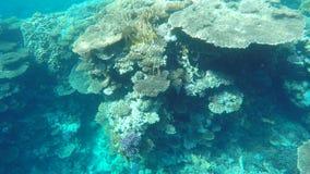 海底无危险浇灌 一能看到鱼和珊瑚 影视素材