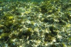海底长满与低海藻 库存图片