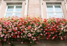 海得尔堡 窗口在老房子里,装饰用花 免版税库存图片