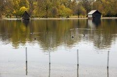海德・伦敦公园蛇纹石 免版税图库摄影