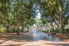海德公园沿途有树的道路 免版税图库摄影