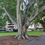 海德公园,悉尼 免版税库存照片
