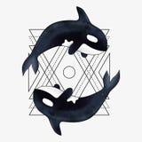 海怪传染媒介例证 海洋哺乳动物 与抽象几何元素的虎鲸 免版税库存照片