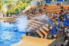 海怪在表现的水闸观众在Loro公园 免版税库存图片