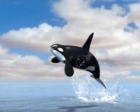海怪虎鲸突破口例证 库存图片