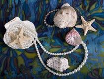 海扇壳仍然生活海运 库存图片