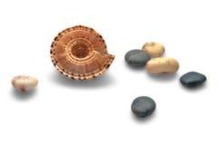 海扇壳小卵石 库存照片