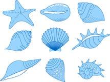 海扇壳收集 免版税库存照片